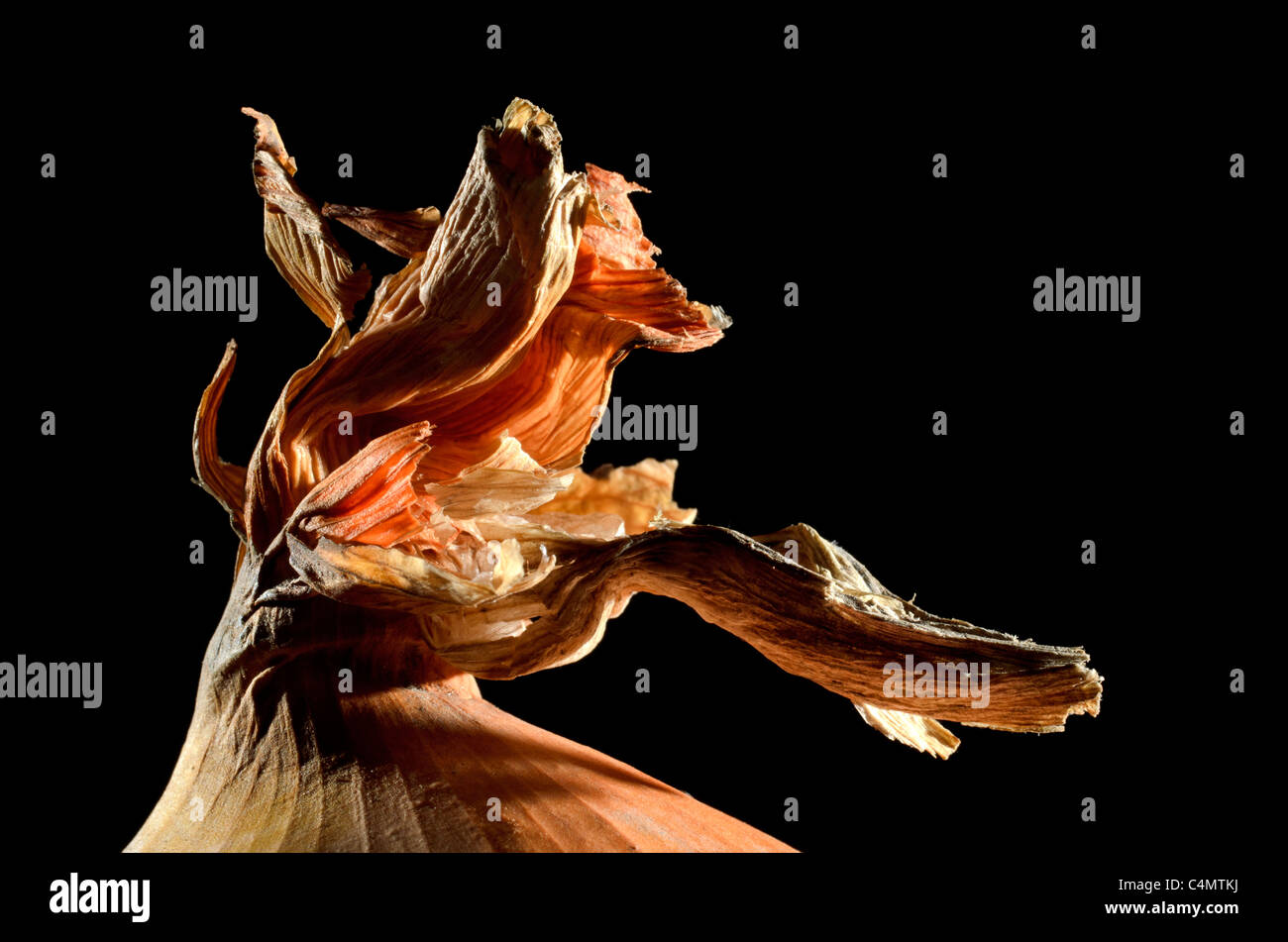 Onion detail - Stock Image