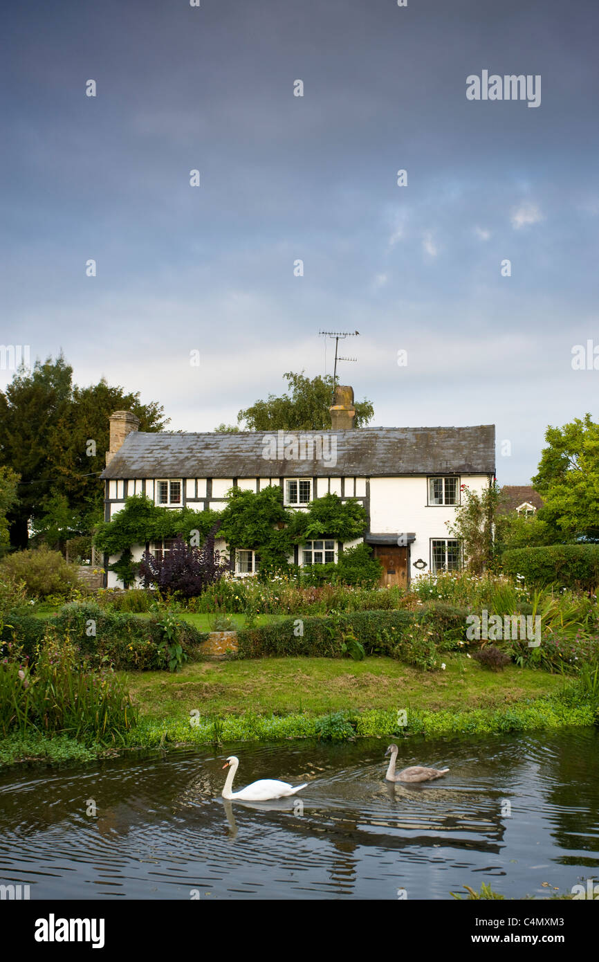 Quaint Tudor style cottage with swan and cygnet on River Arrow at Eardisland, Herefordshire, UK - Stock Image