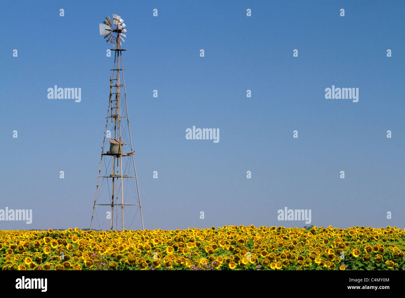 Windmill and field of sunflowers north of Necochea, Argentina. - Stock Image