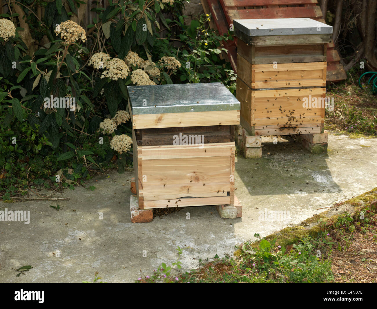 Two Bee Hives For Honey Bees In A Garden - Stock Image