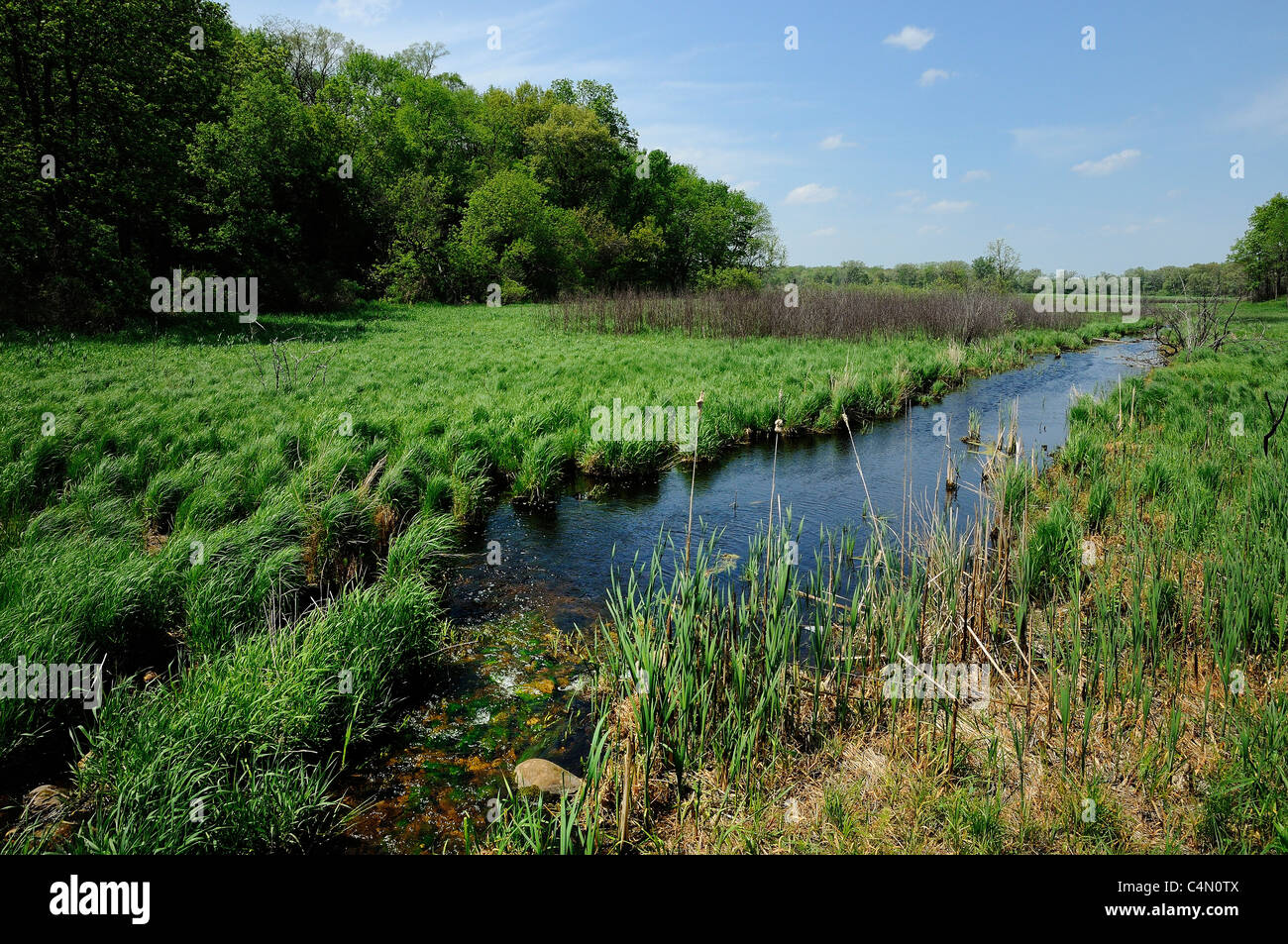 Stream running into glacial bog at Moraine Hills State Park in Northern Illinois, USA. - Stock Image