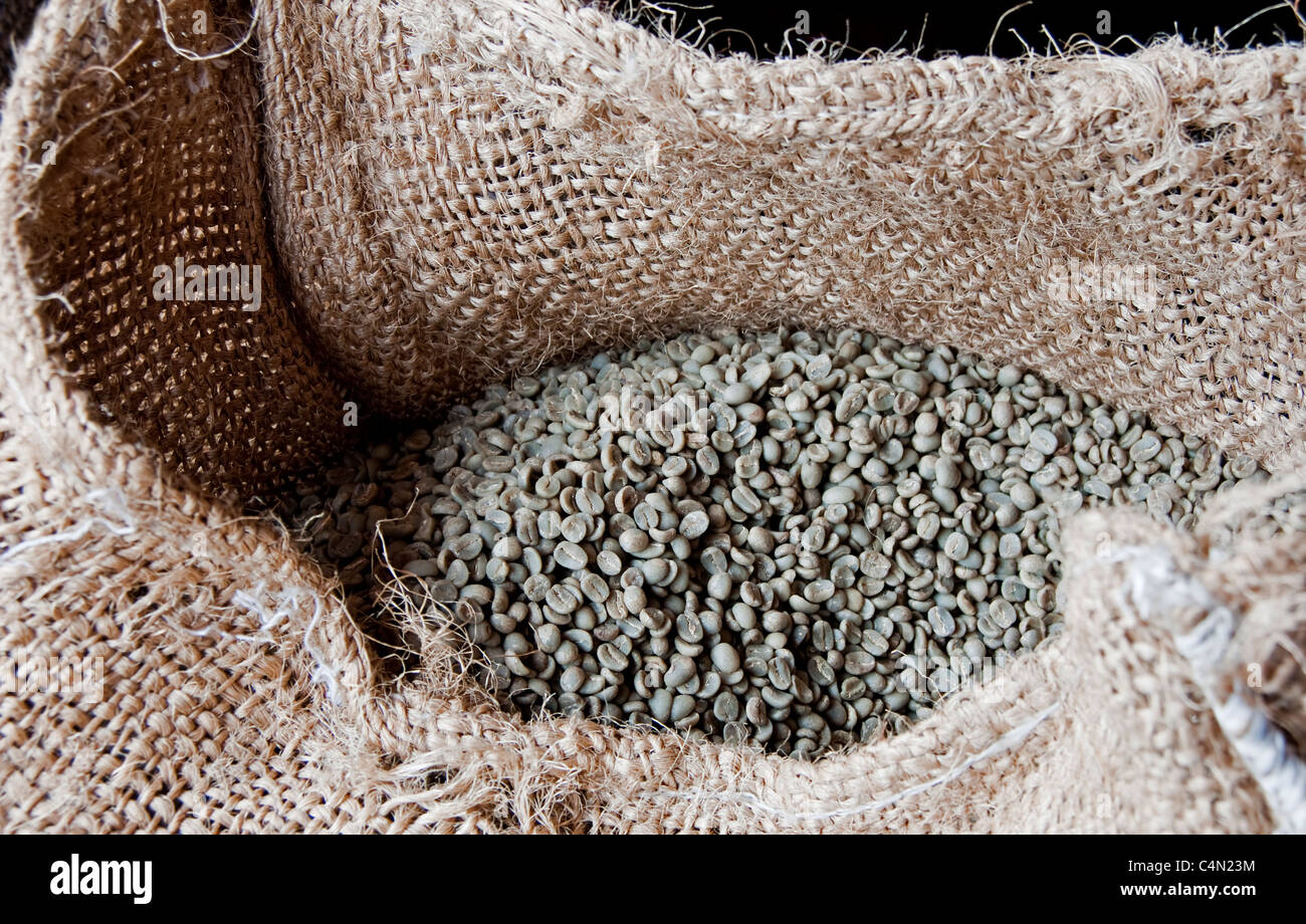 Raw Guatemalan Arabica coffee beans awaiting roasting in Antigua - Stock Image
