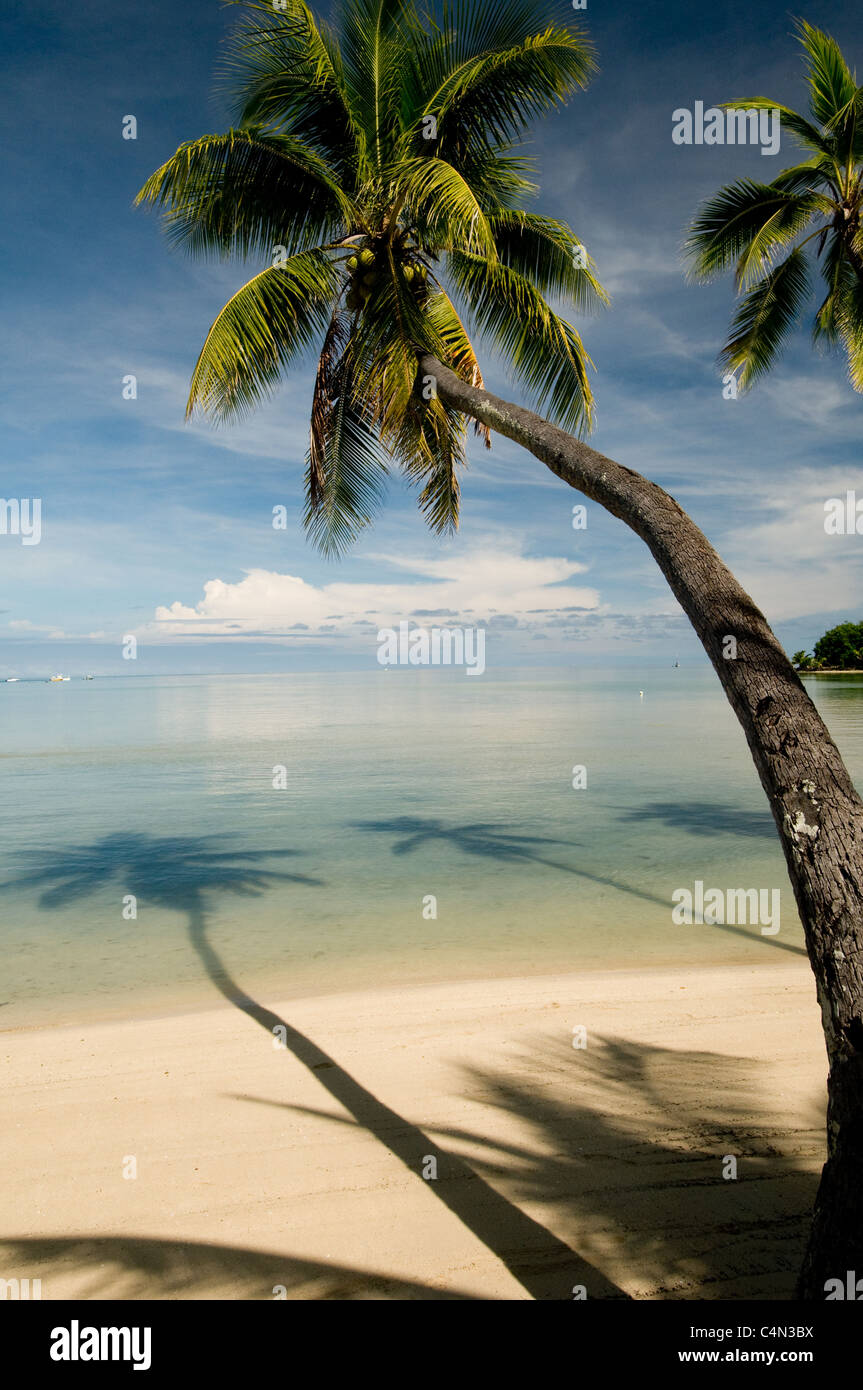 Palm tree on tropical island beach in Fiji South Pacific - Stock Image