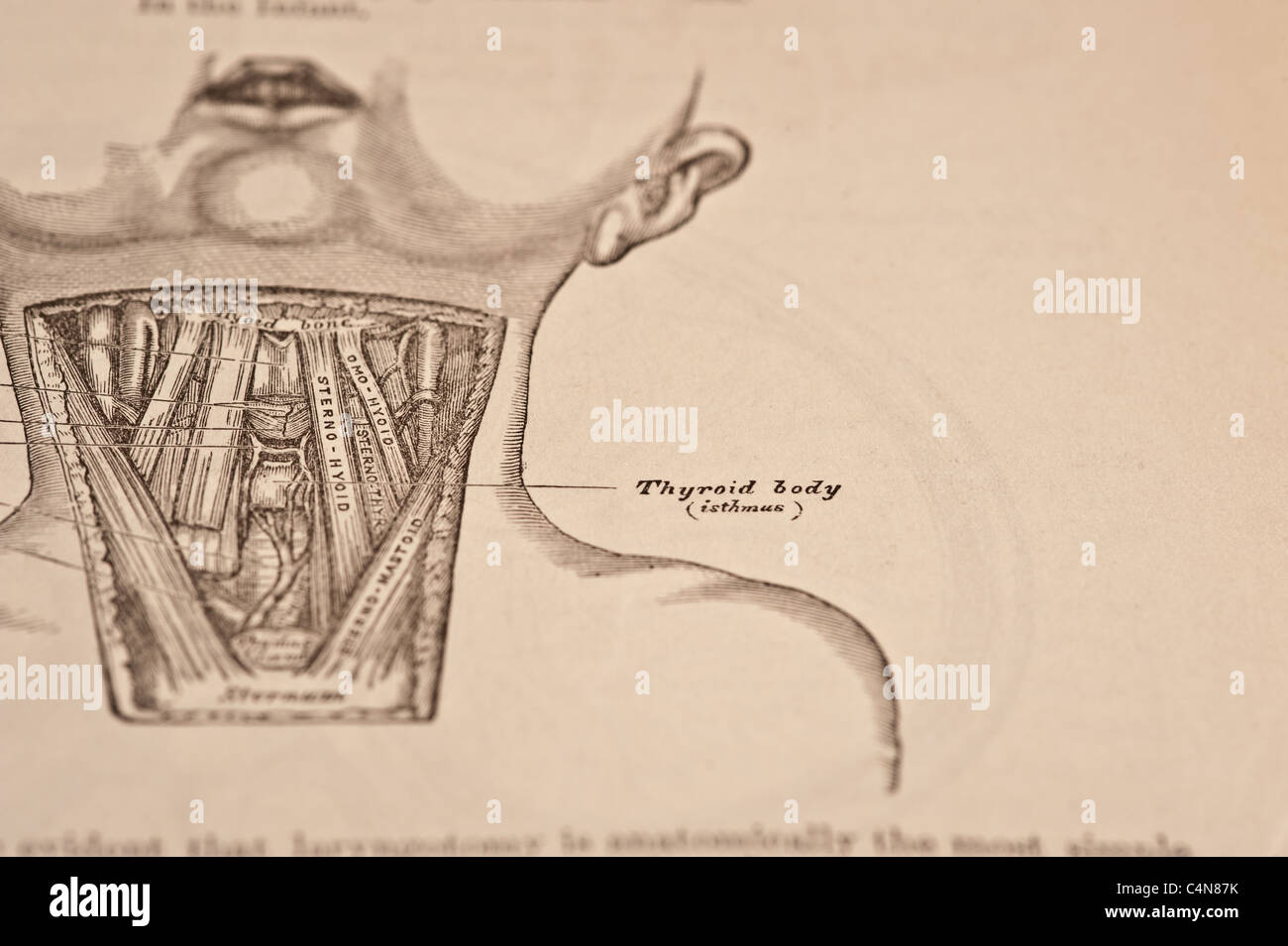 Anatomy Descriptive And Surgical Copyright 1883 Grays Anatomy Henry