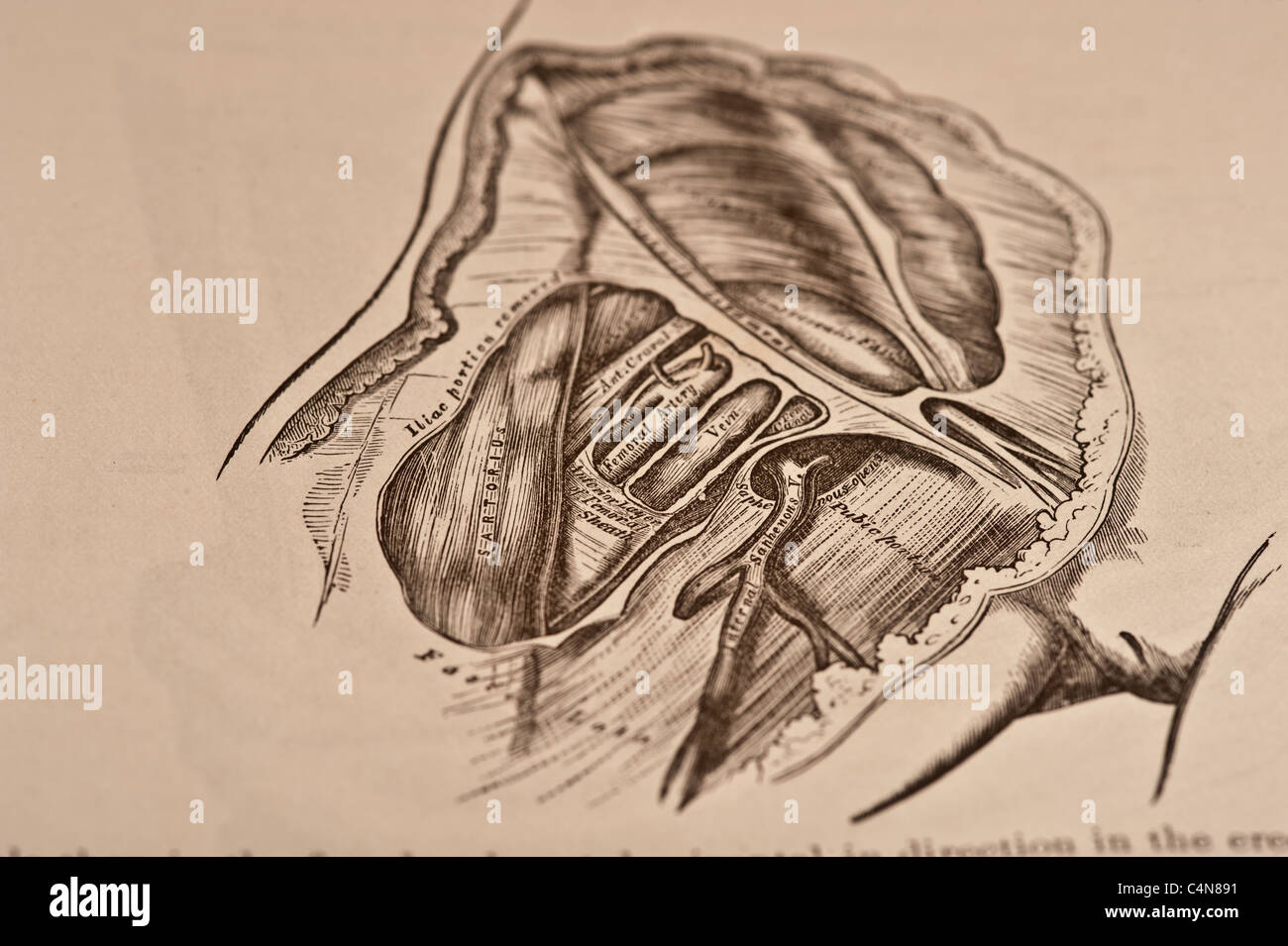 Anatomy Descriptive Surgical Copyright 1883 Stock Photos & Anatomy ...