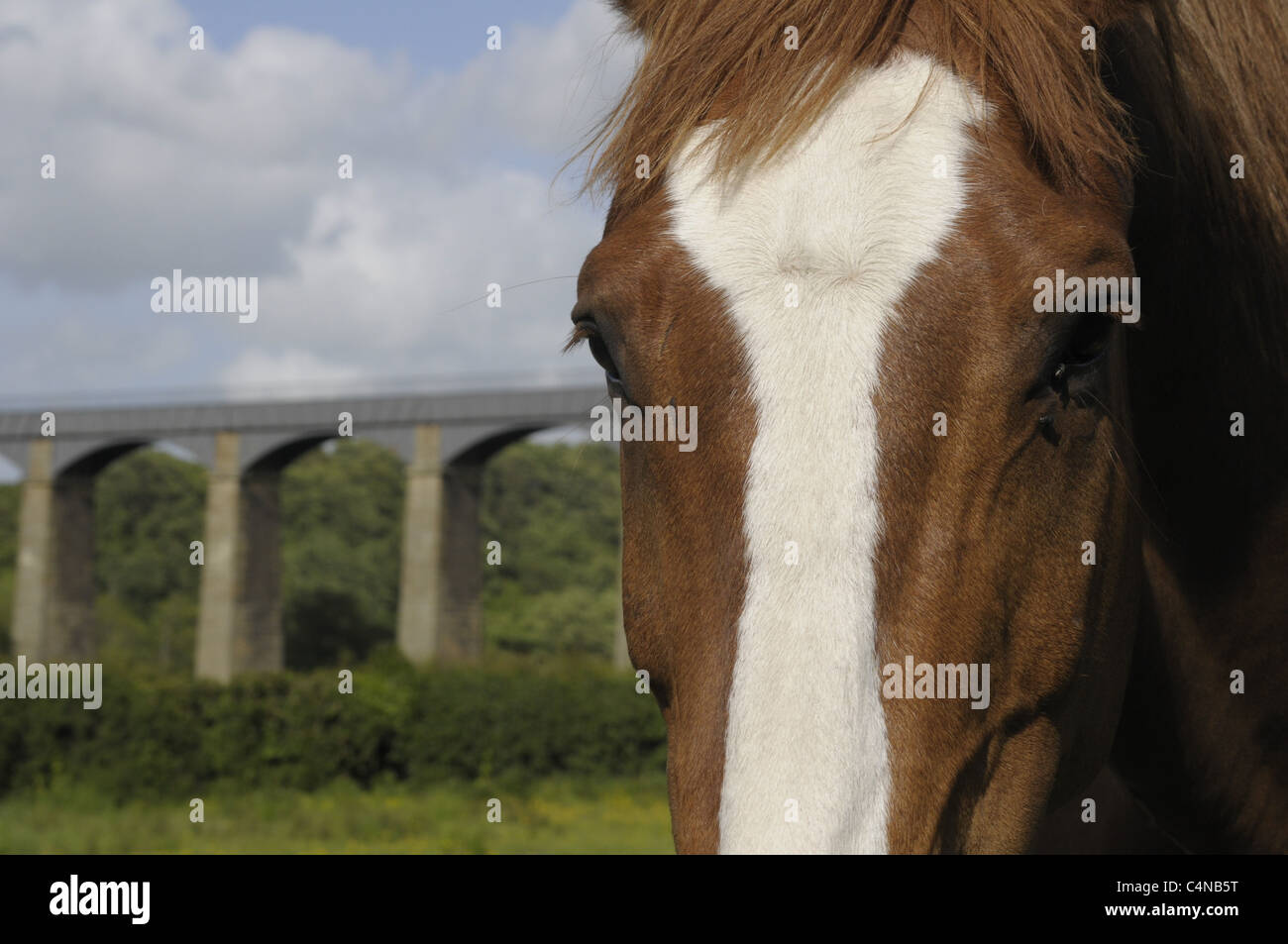 Horse with Pontycysyllte aquaduct in the background. - Stock Image