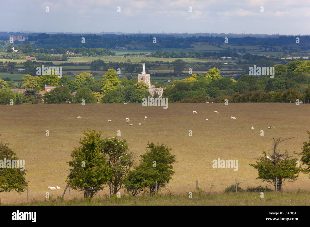 Sheep and Ivinghoe church Chilterns Buckinghamshire - Stock Image