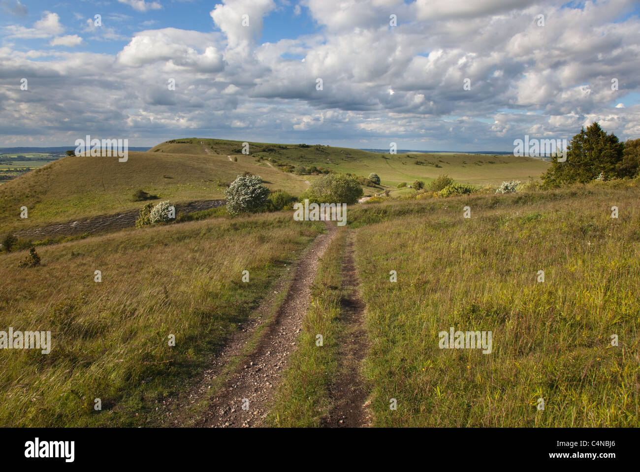 The Ridgeway Long distance path at Ivinghoe Beacon in the Chiltern Hills Buckinghamshire - Stock Image