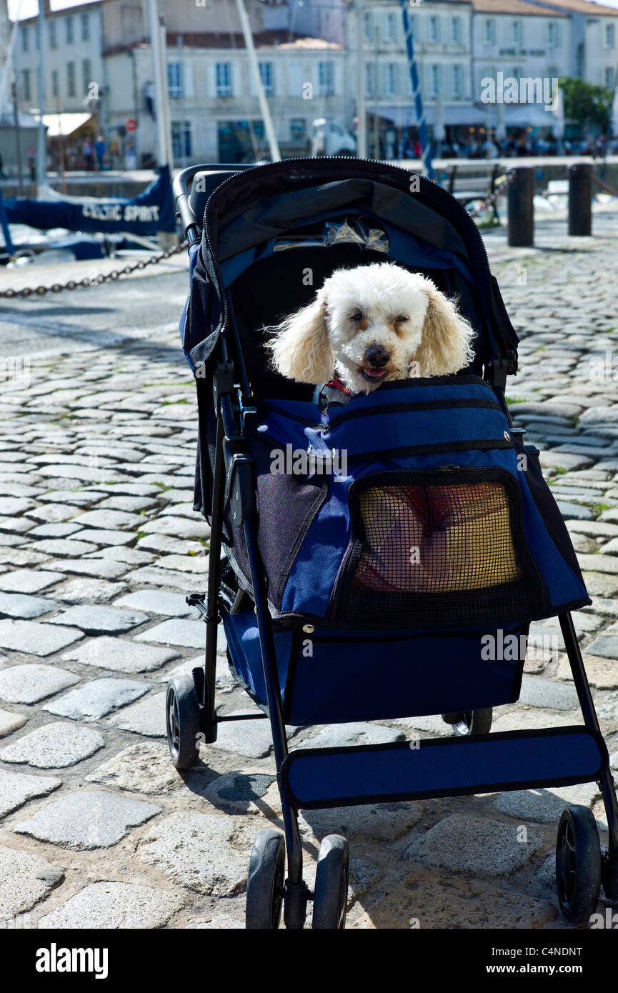 Traditional French poodle pampered pet in baby stroller by the harbour at St Martin de Re, Ile de Re, France - Stock Image