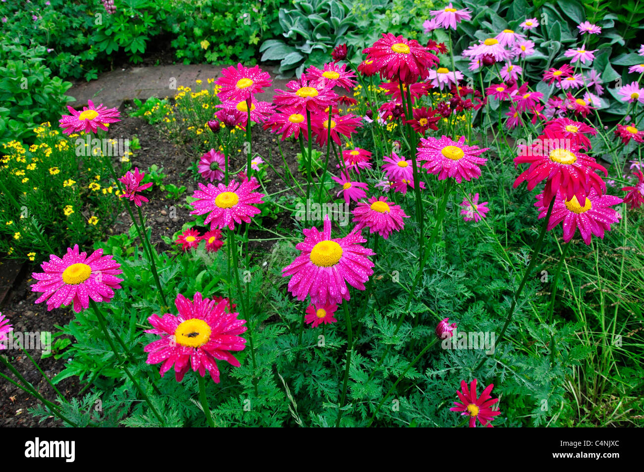 Perennial Flowers Stock Photos Perennial Flowers Stock Images Alamy