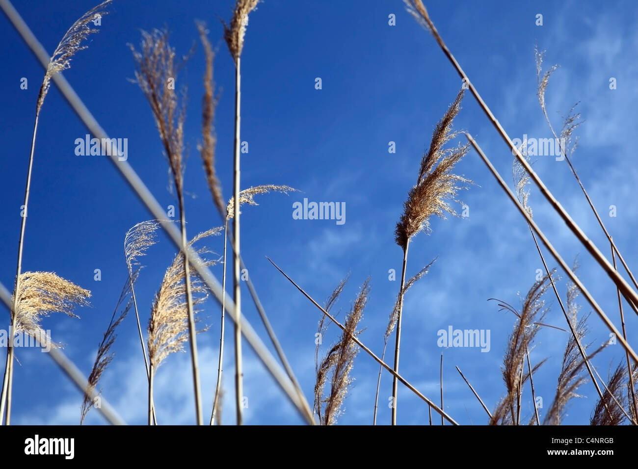 Summer song. Plants on a blue sky background. Shallow DOF. - Stock Image