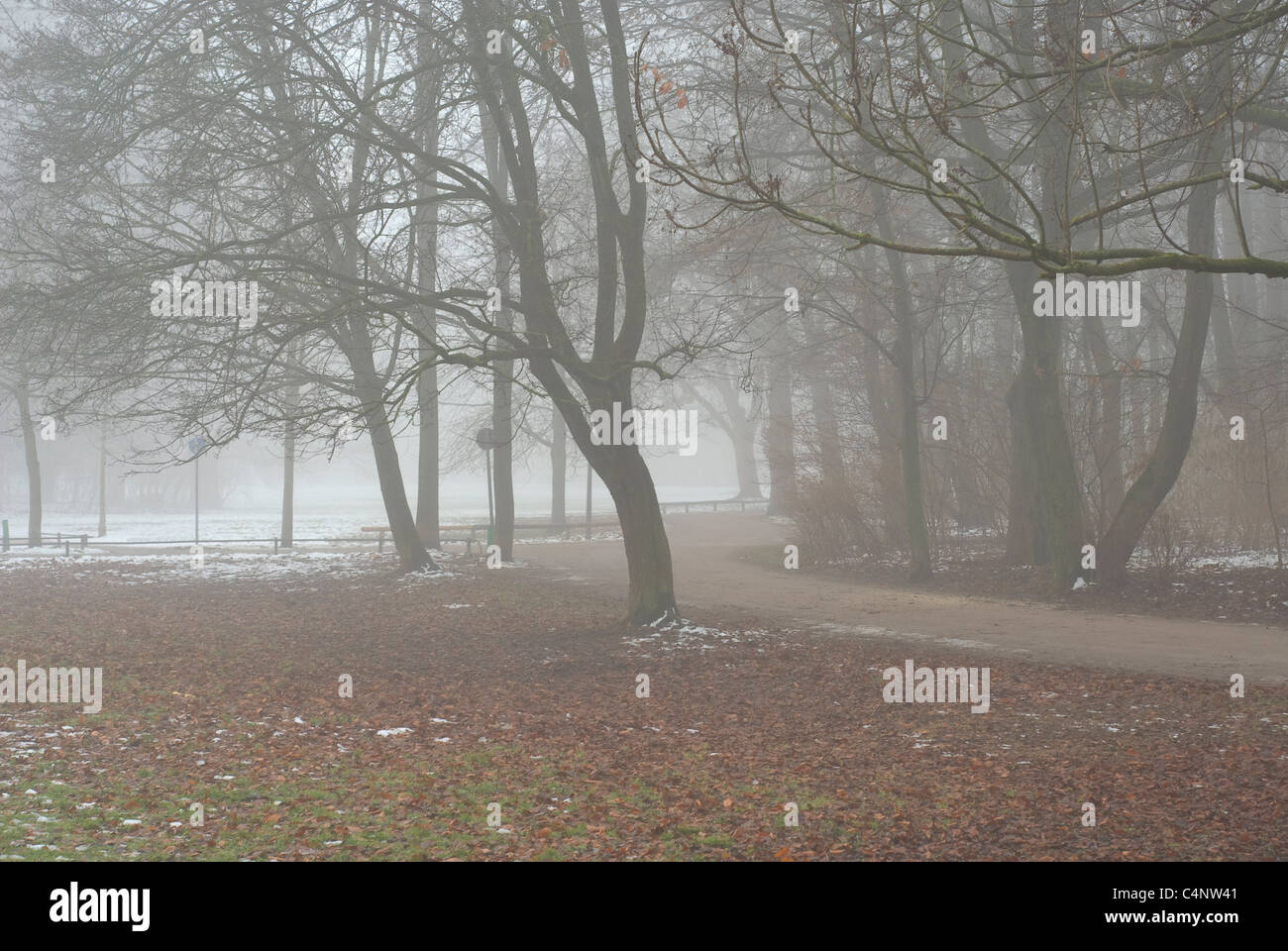 Foggy Lane on an Early Winter Day - Stock Image