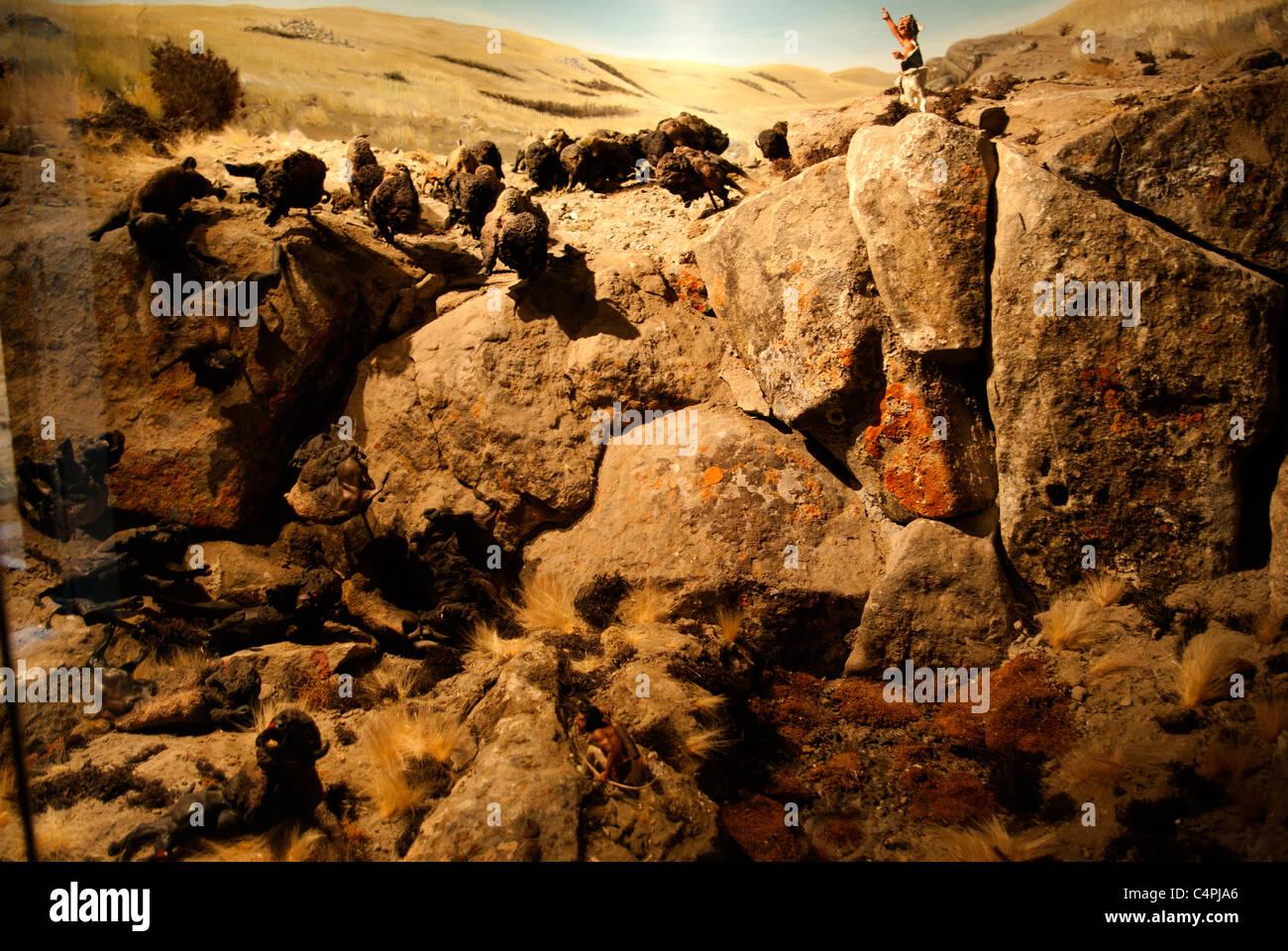 Diorama of Plains Indian buffalo culture, Head-Smashed-In Buffalo Jump, Alberta, Canada - Stock Image
