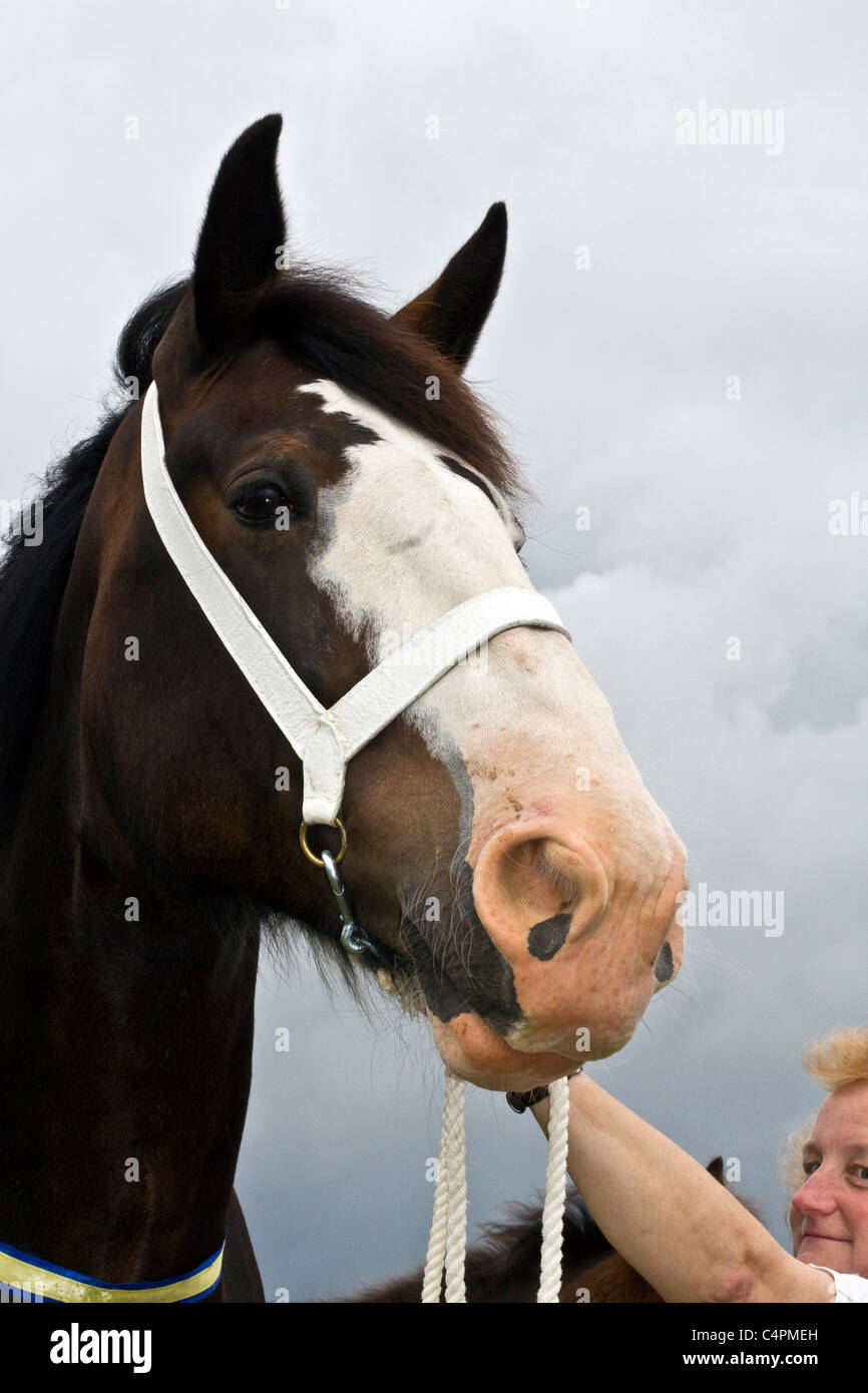 Events and Competitors at the Cheshire Game & Country Fair Show, Knutsford, UK - Stock Image