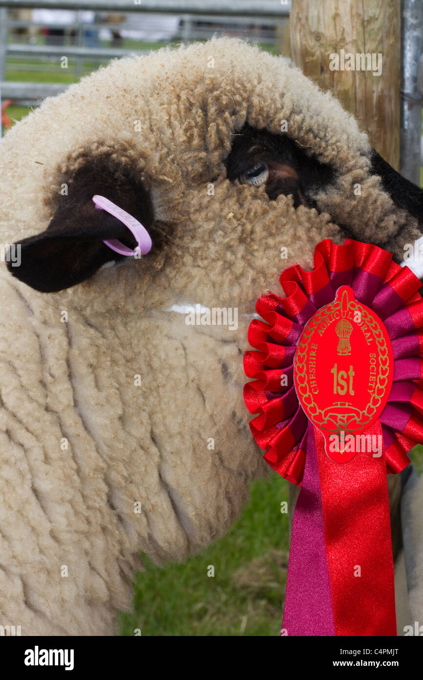 Events and Competitors, animal, award, rosette, ribbon, competition, symbol, winner, show, head, harness, purebred, - Stock Image