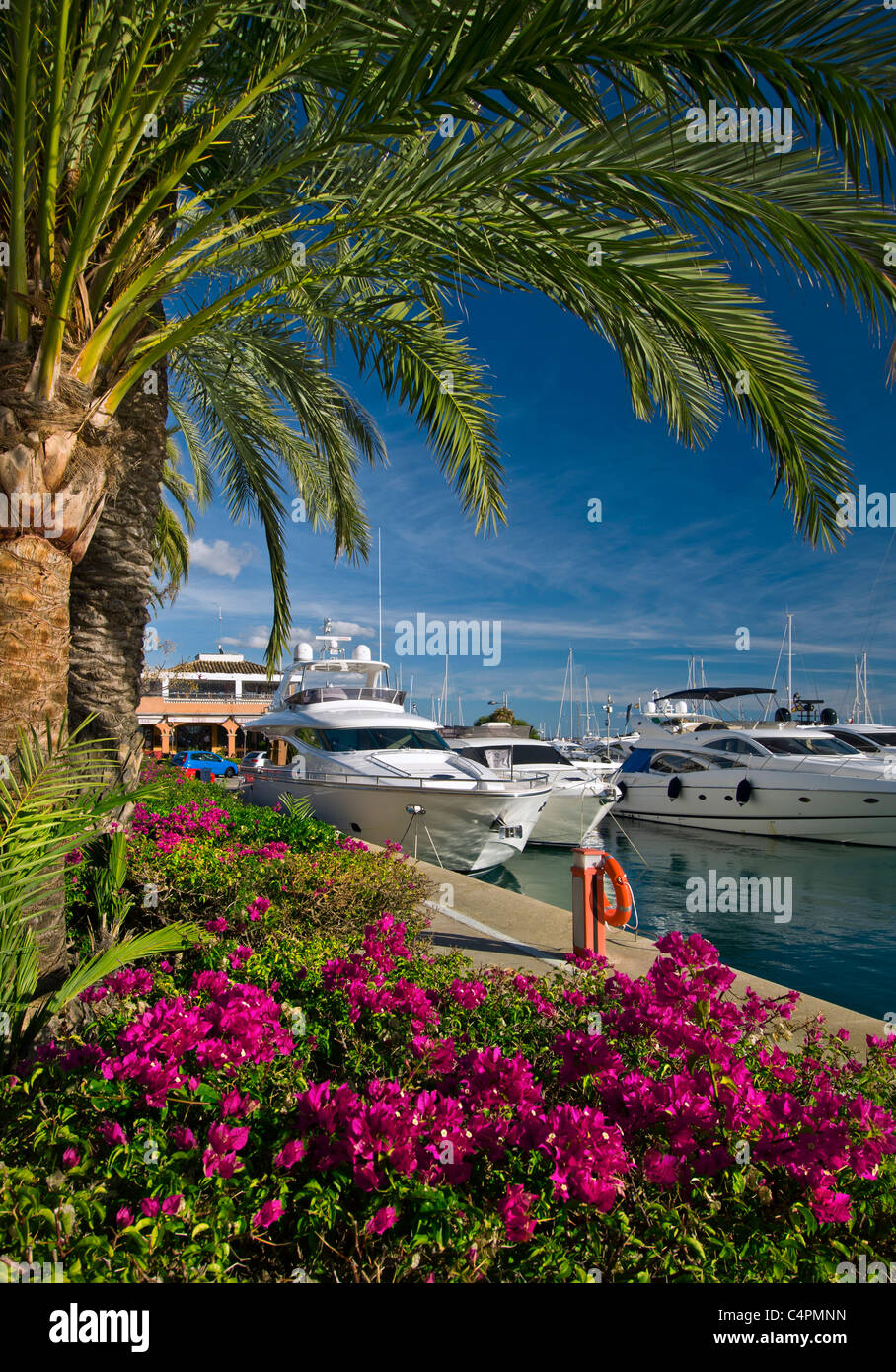 Luxury motor yachts moored at Puerto Portals marina Portals Nous Palma de Mallorca Balearic Islands Spain - Stock Image