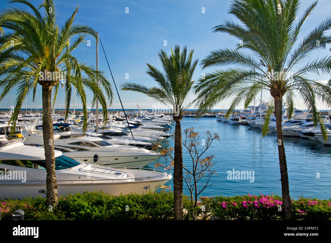 PUERTO PORTALS YACHTS PALM TREES MALLORCA Luxury motor yachts moored at Puerto Portals marina Portals Nous Palma - Stock Image