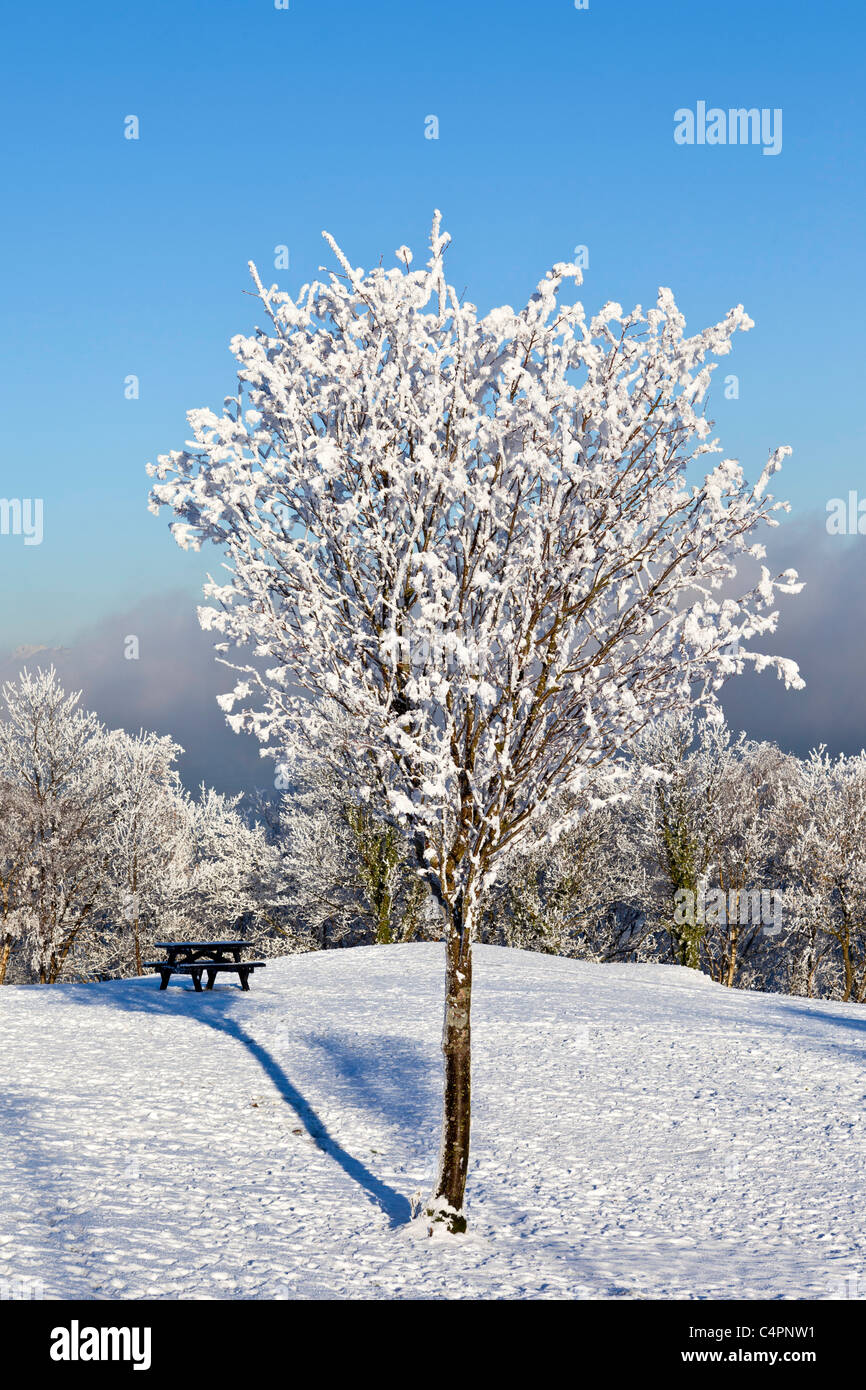Park bench on a lovely winters day in Greenock - Stock Image
