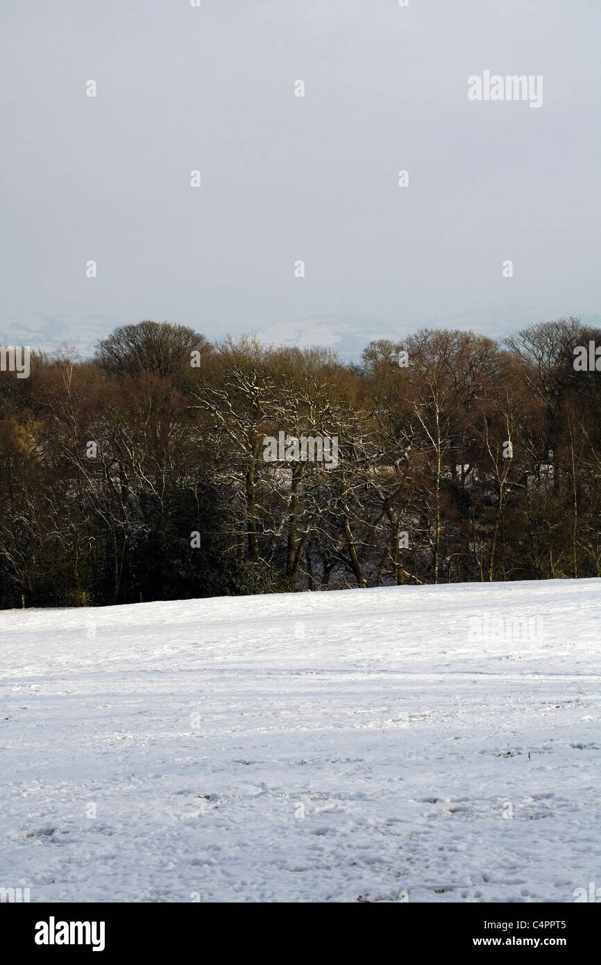 Snow covered fields hedges and trees winter by a footpath Alderley Edge Cheshire England - Stock Image