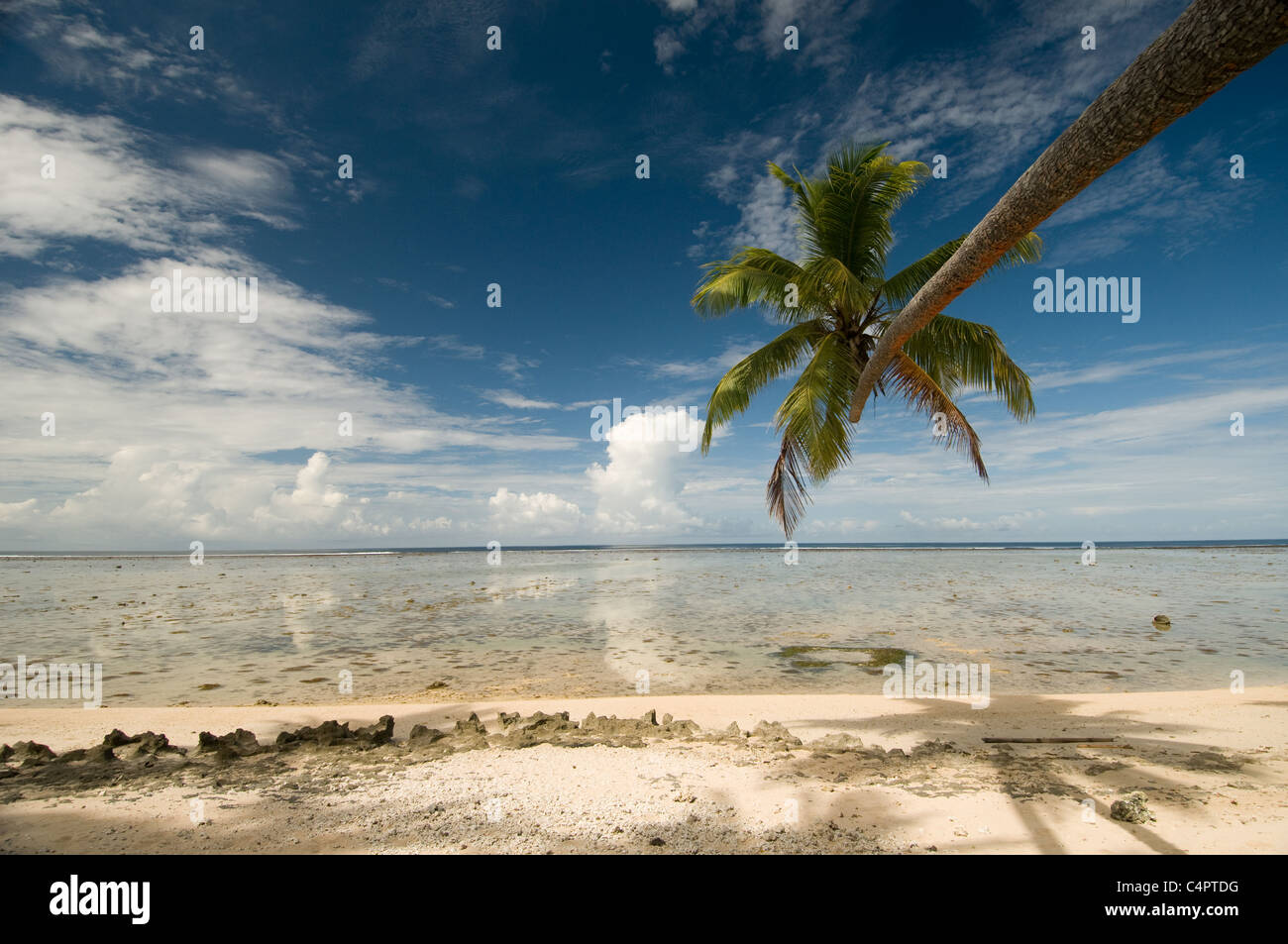 Tropical palm tree leans over deserted beach on Viti Levu island in Fiji South Pacific - Stock Image