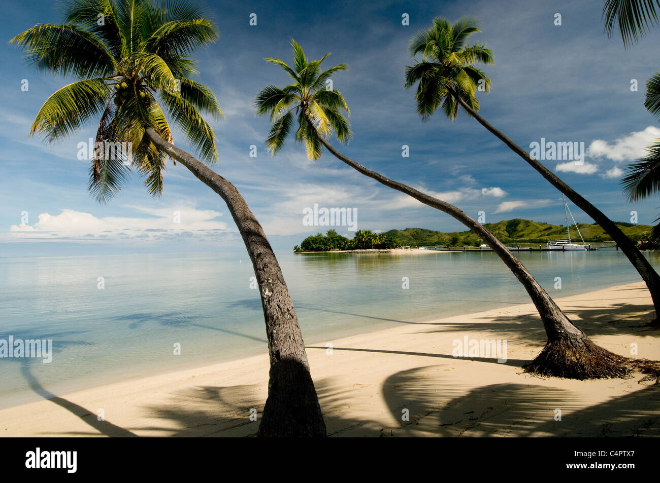 trio of palm trees lean toward the ocean on an island bay in Fiji South Pacific - Stock Image