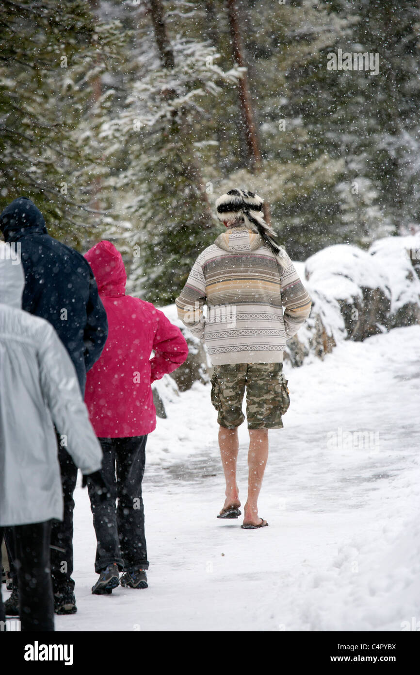 6c8951c1f18d86 Eccentric Man Wearing Shorts and Flip Flops in a Snow Storm - Stock Image