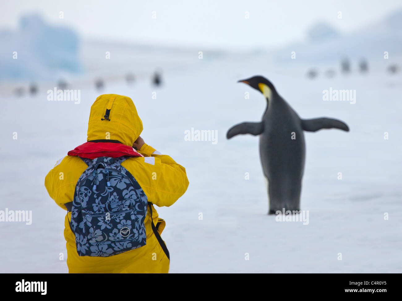 Tourist photographing Emperor Penguin on ice, Snow Hill Island, Antarctica - Stock Image