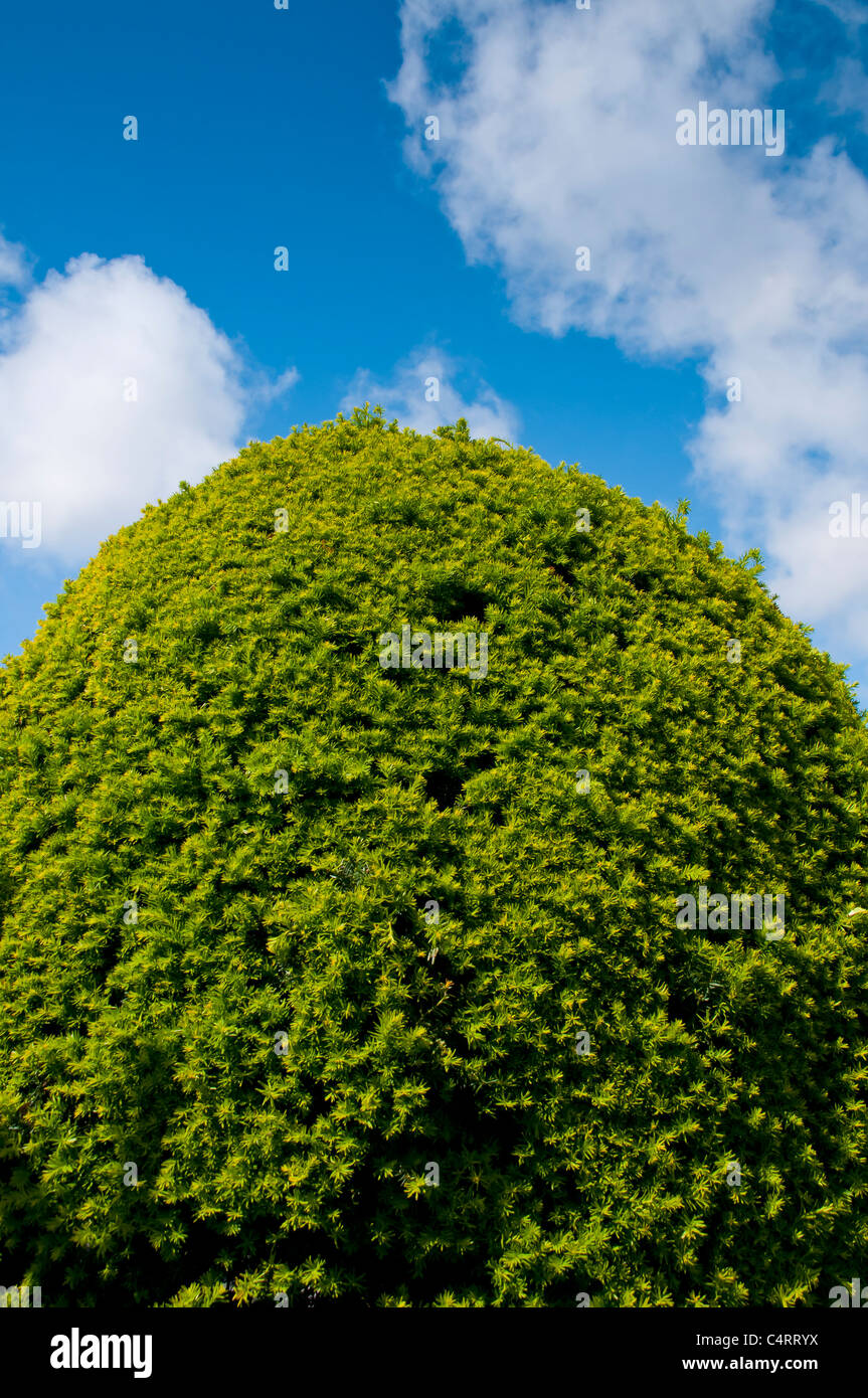 bush,green,blue,sky,abstract,'space',topiary,tree - Stock Image