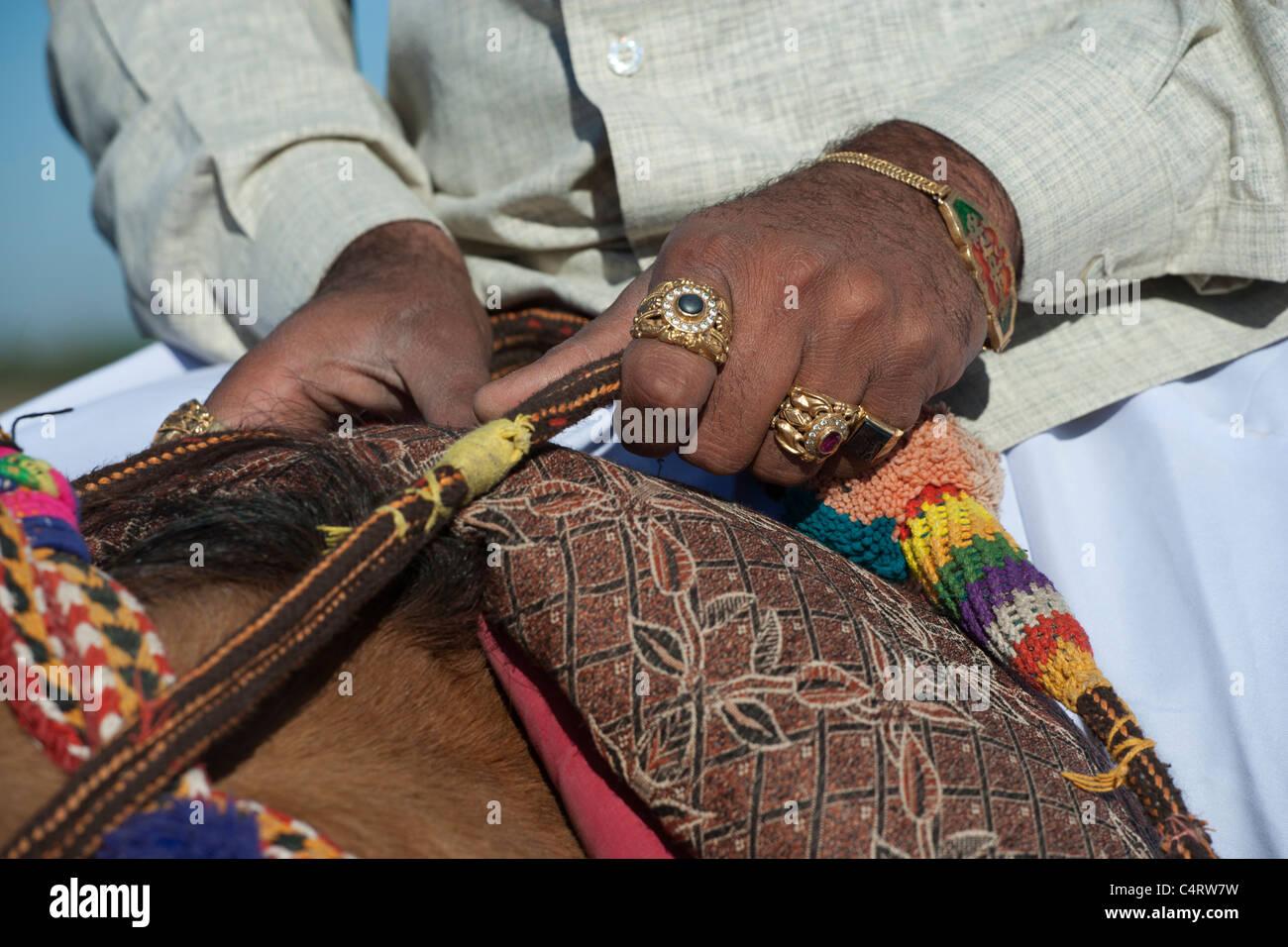 Kathiawari Horse India Animal Tradition - Stock Image