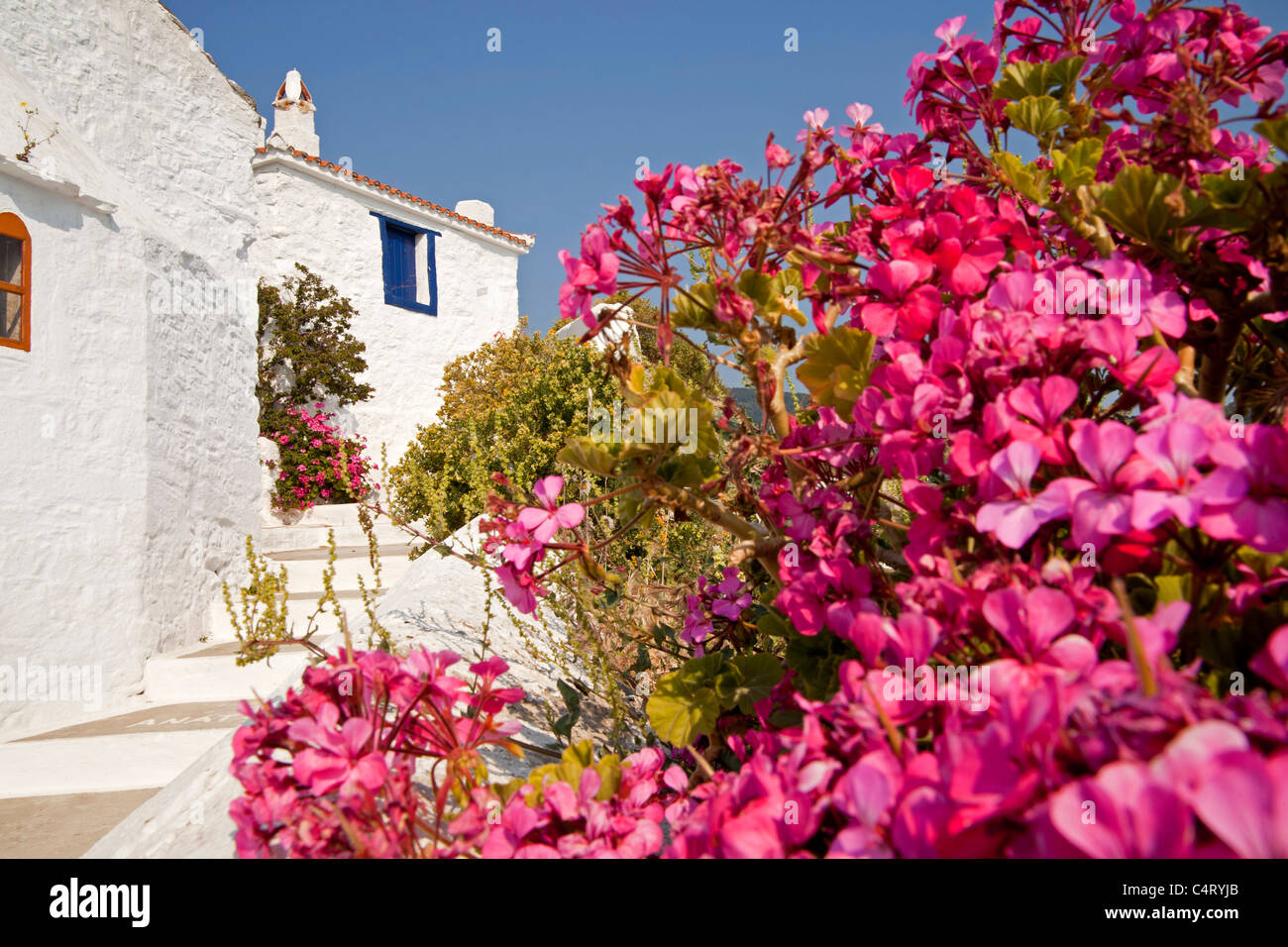 colourful flowers and typical white buildings on the way to the castle Castro in Skopelos Town,  Northern Sporades, Stock Photo