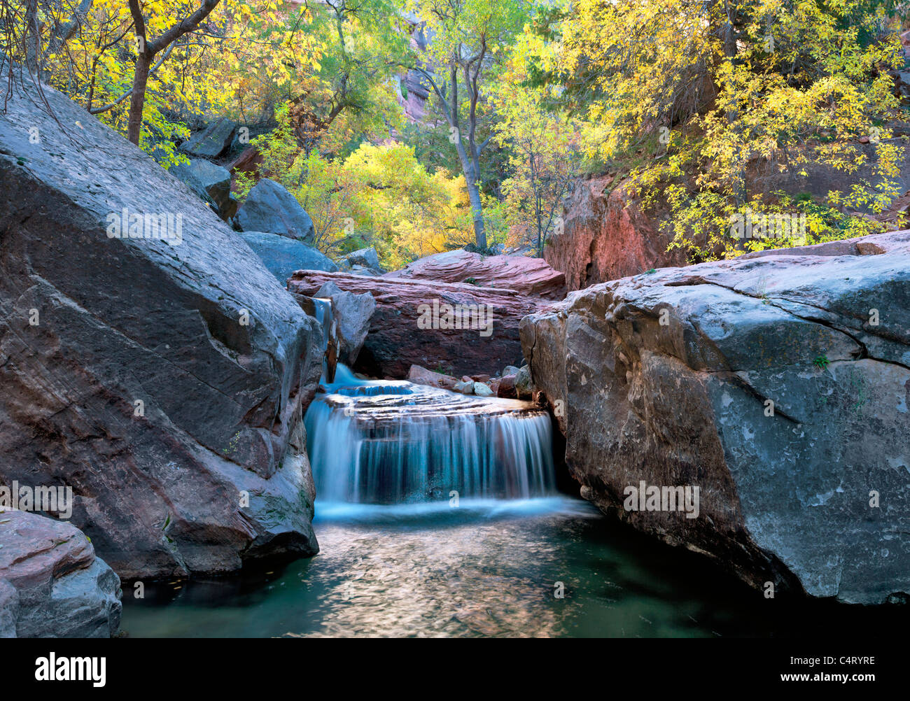 Small waterfall on Left Fork of North Creek with fall colors. Zion National Park, Utah. - Stock Image