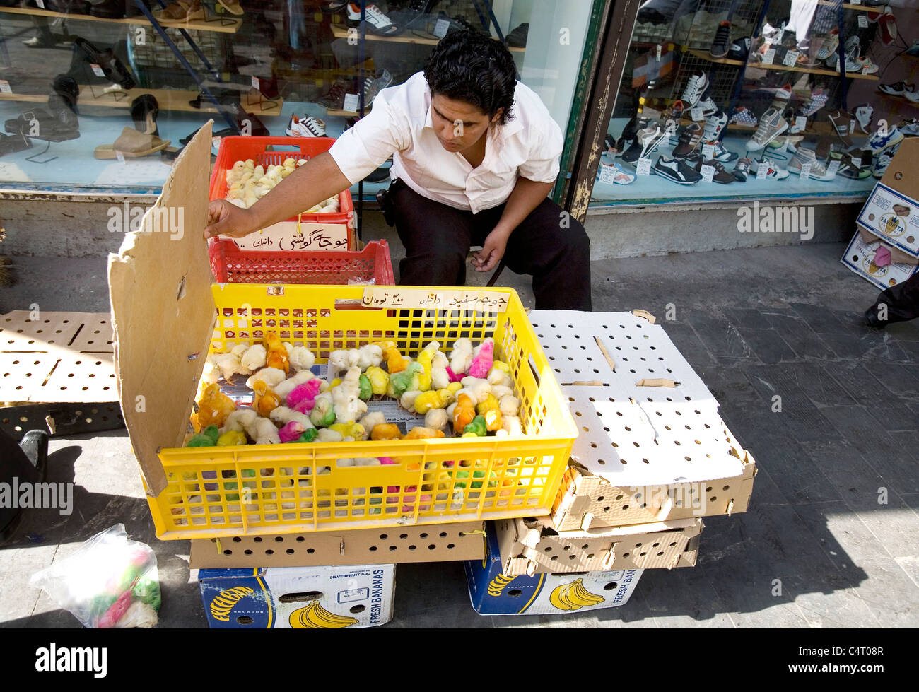 Young man with painted chicks for sale at the bazaar in Rasht, Gilan province, Iran - Stock Image