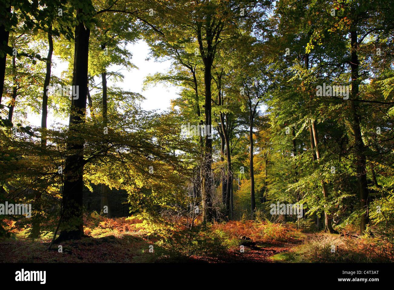Forest, trees, sunshine, summer, perfect idyll. - Stock Image
