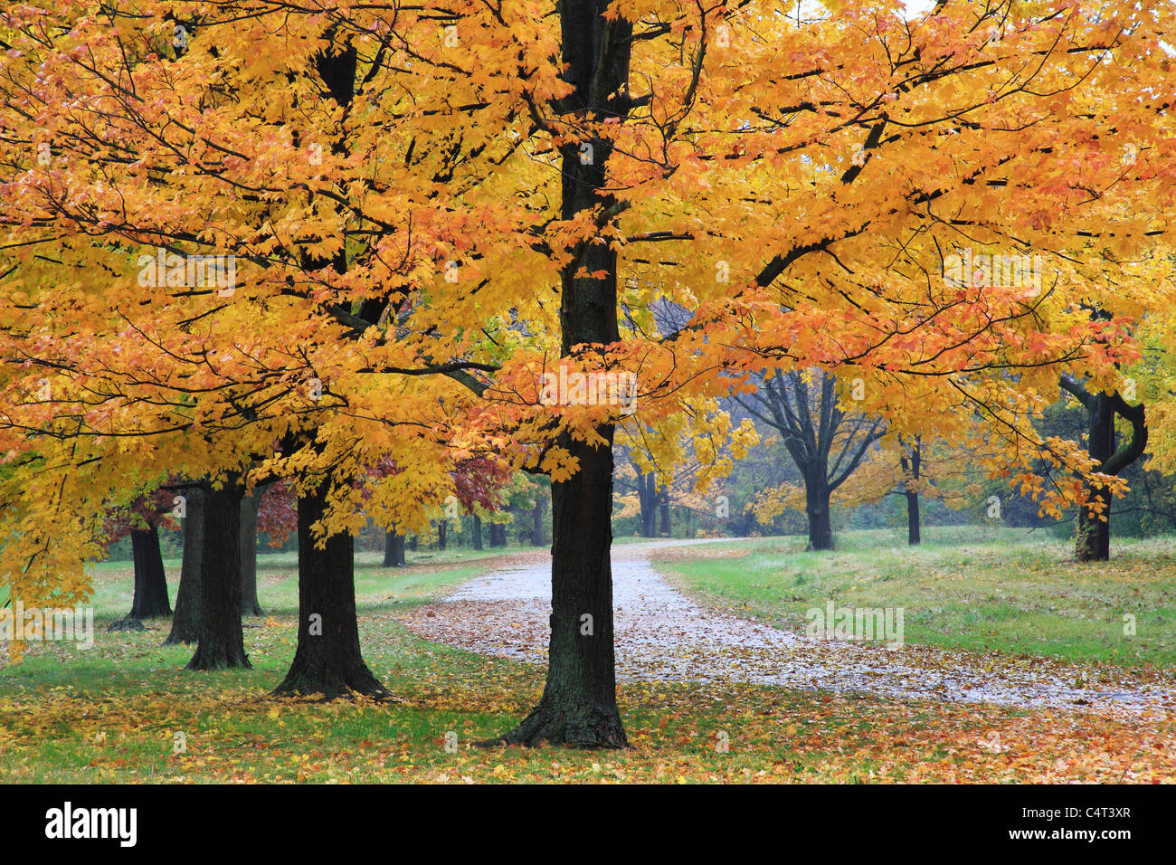 A Quiet Walking Path Through The Park On A Rainy Day In Autumn, Sharon Woods, Southwestern Ohio, USA - Stock Image
