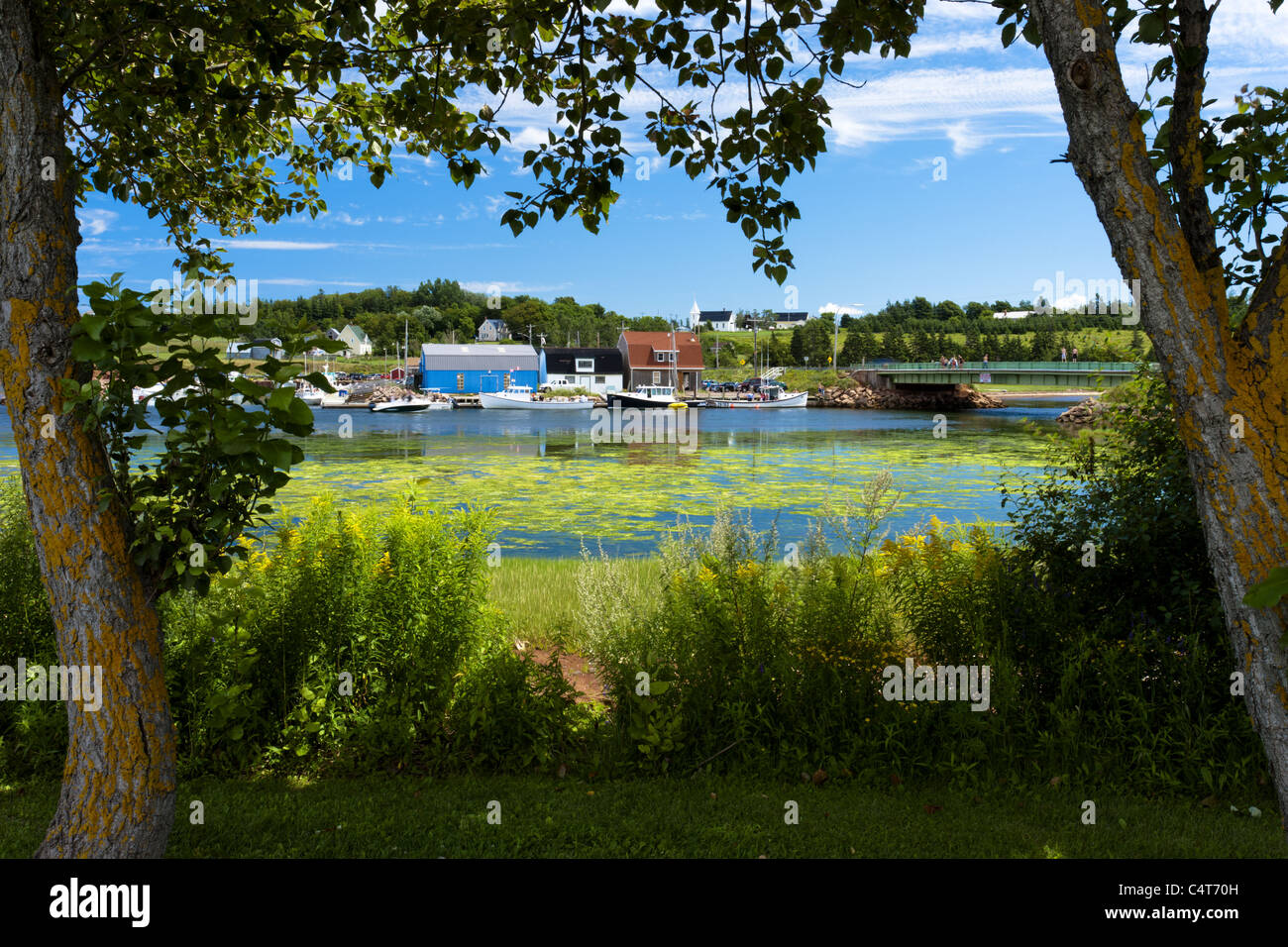 Prince Edward Island looking east just by Stanley Bridge on the east coast of Canada - Stock Image