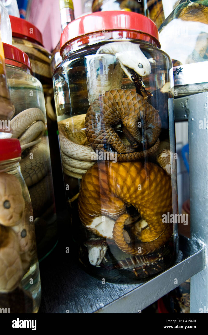 Snake wine is a popular alcoholic drink with men in Vietnam and other parts of south east Asia. - Stock Image