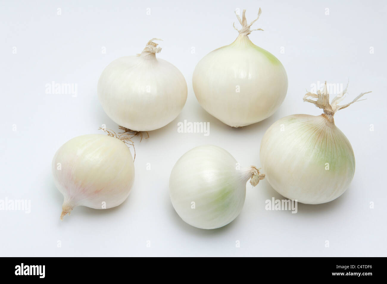 Garden Onion (Allium cepa). Five white onions. Studio picture against a white background. - Stock Image