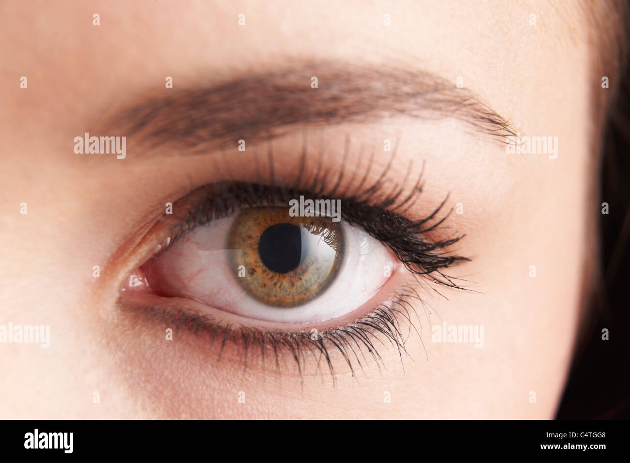 close up of womans brown eye with false eye lashes - Stock Image