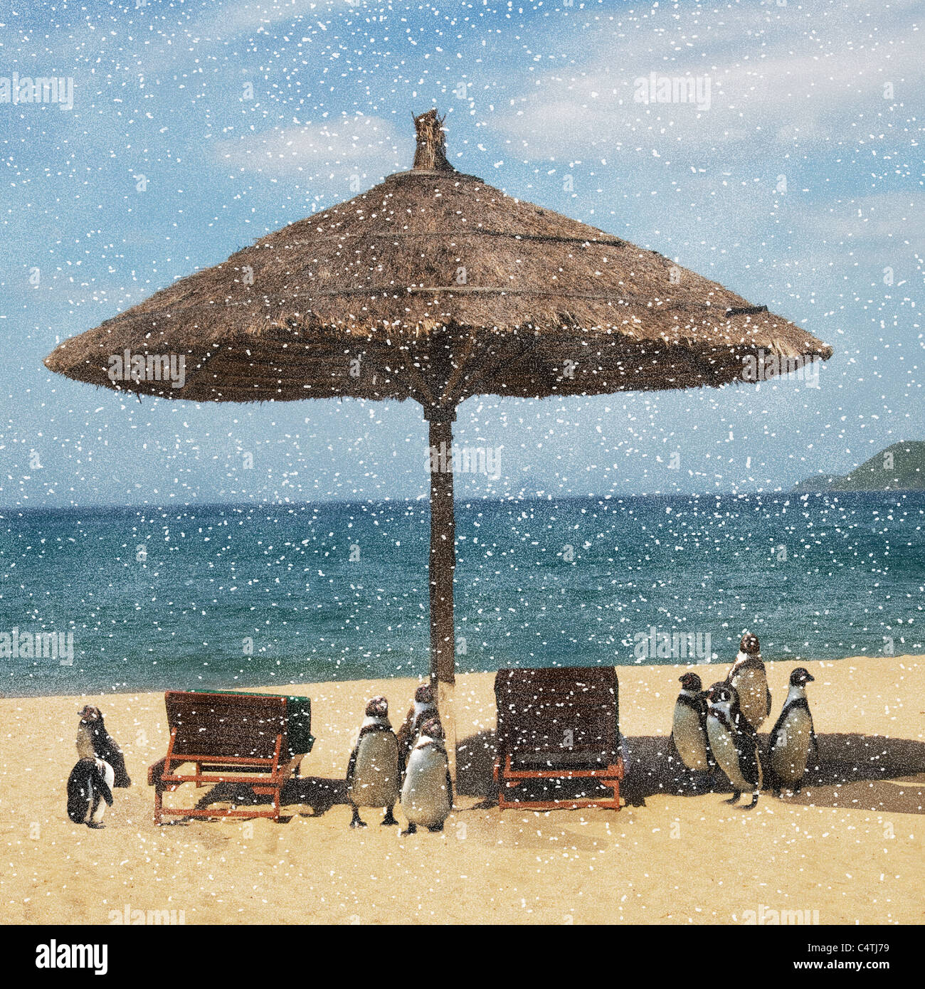 Snow falling on penguins on tropical beach - Stock Image