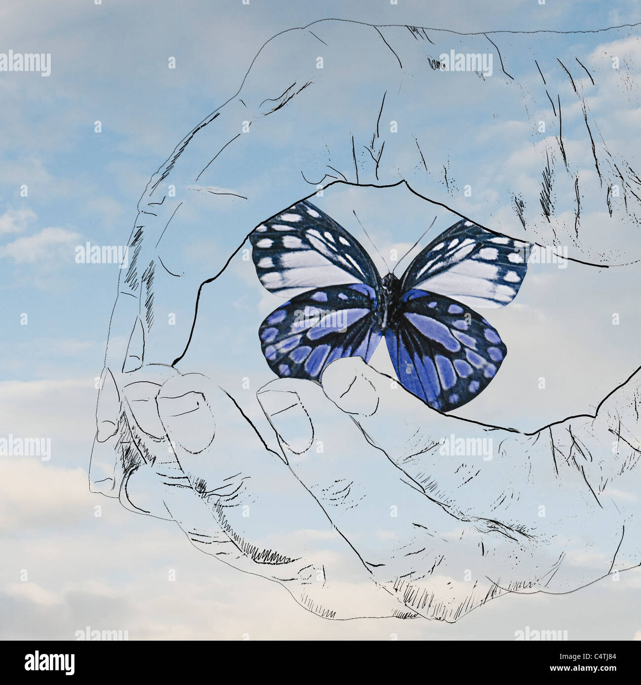 Cupped hands holding butterfly Stock Photo