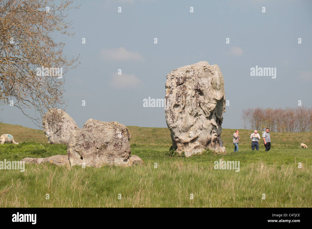 Visitors walking beside some inner circle standing stones. part of the Avebury Henge & Stone Circles site, Wiltshire, - Stock Image