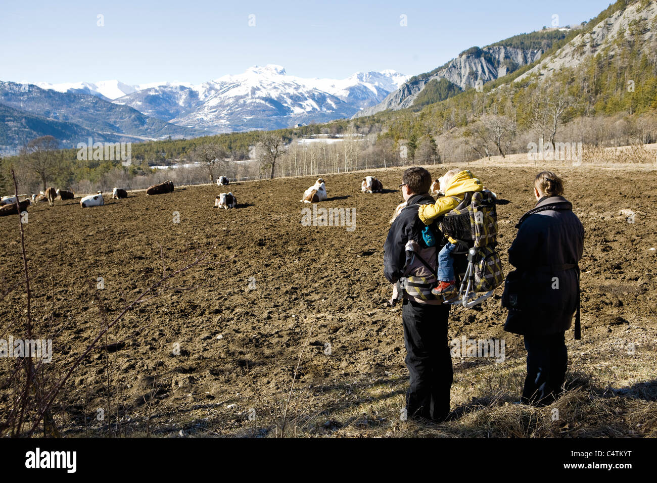 Family hiking together, looking at cows in mountain pasture - Stock Image