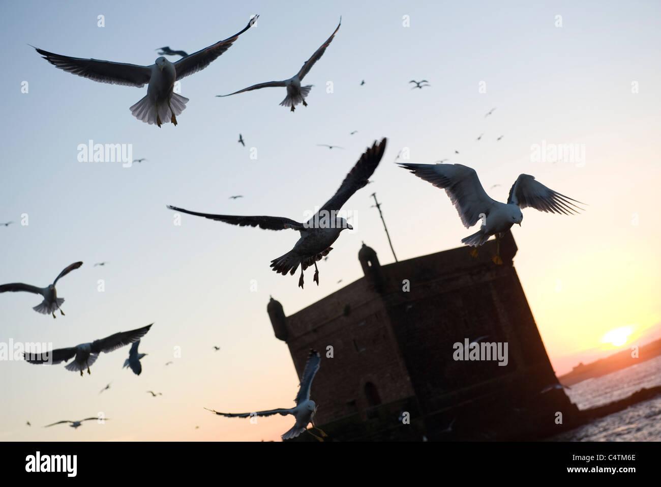 Gulls flying over sea - Stock Image