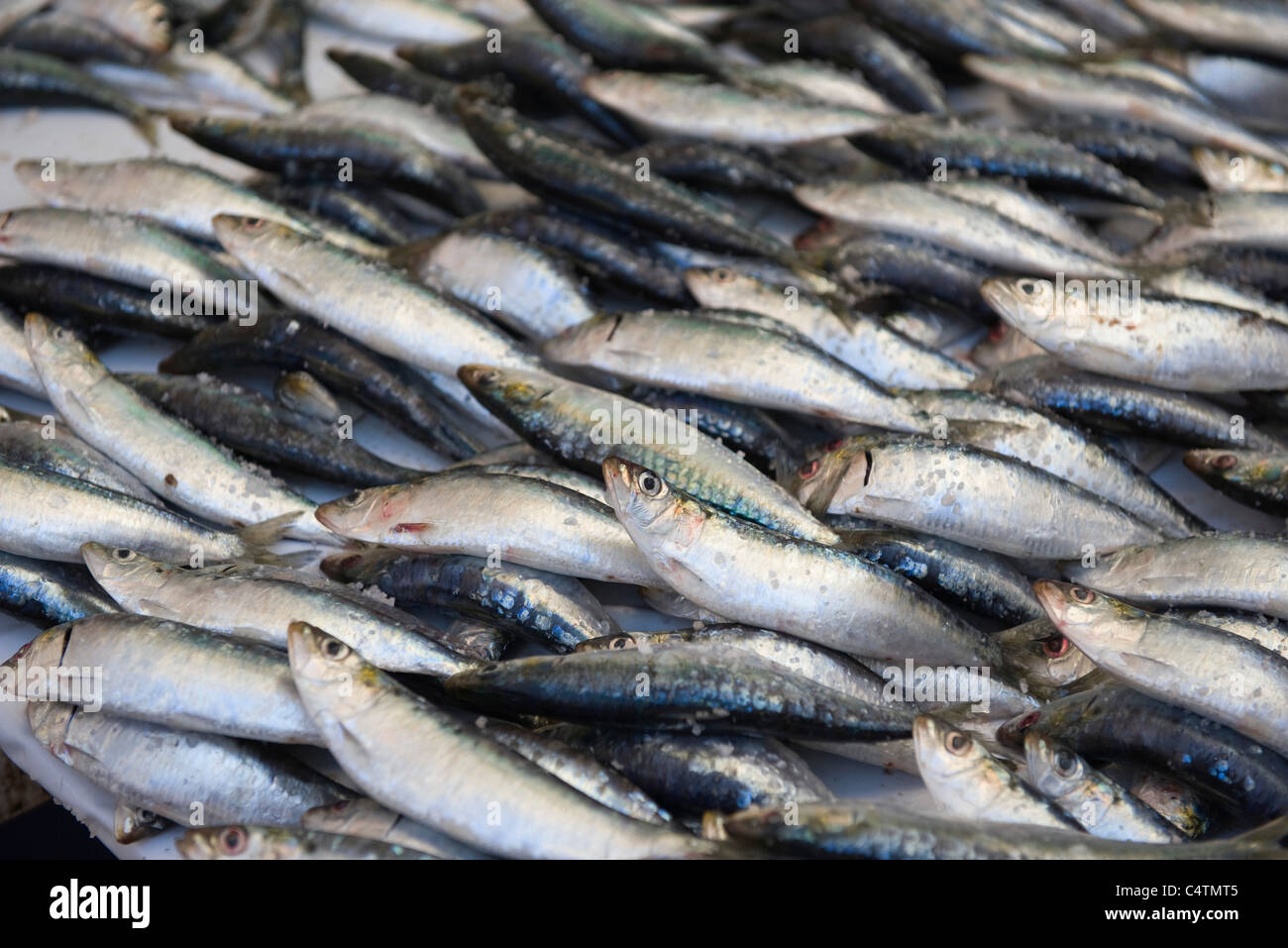 Fresh fish, full frame - Stock Image