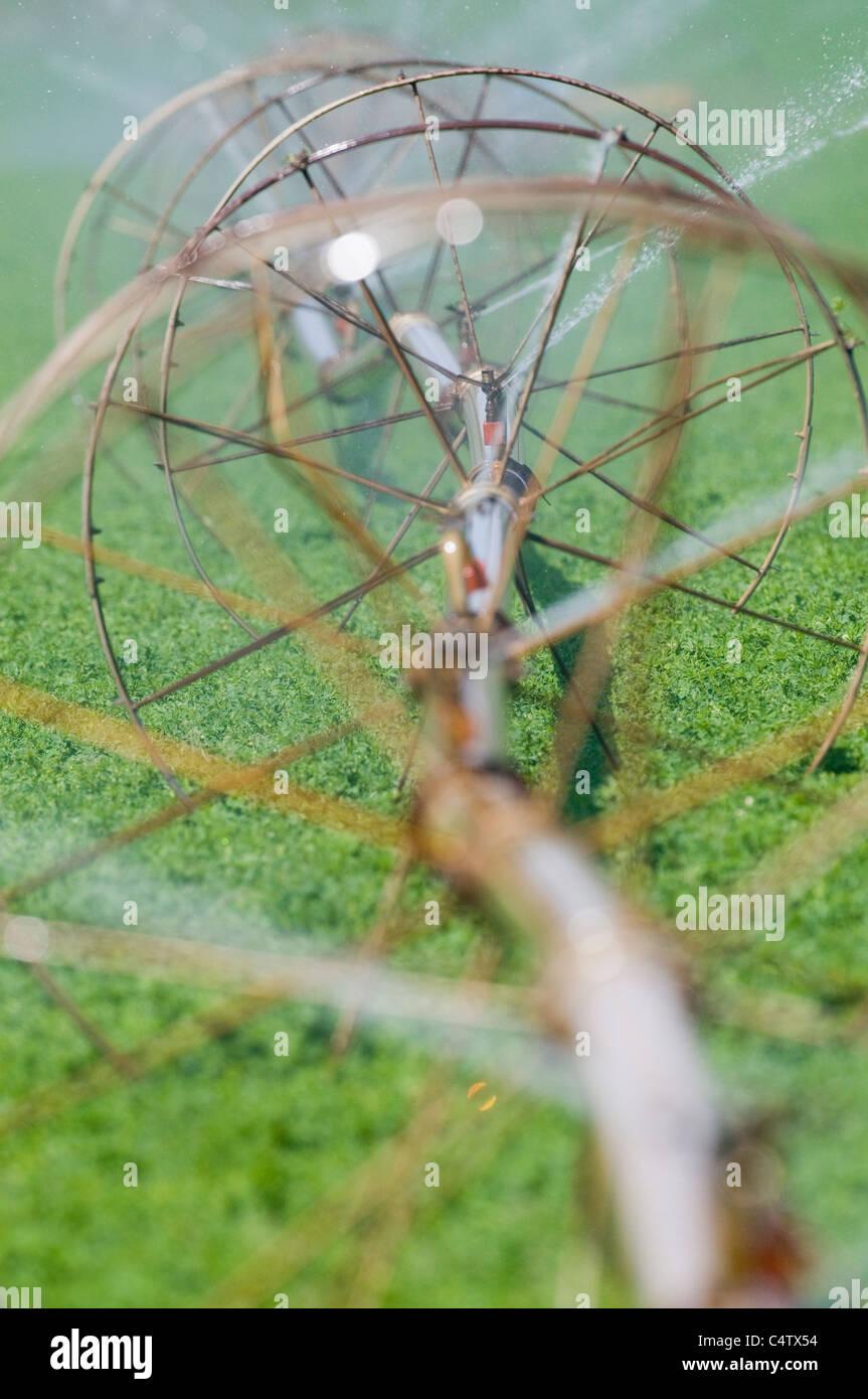 Sprinkler irrigation in Idaho alfalfa field - Stock Image