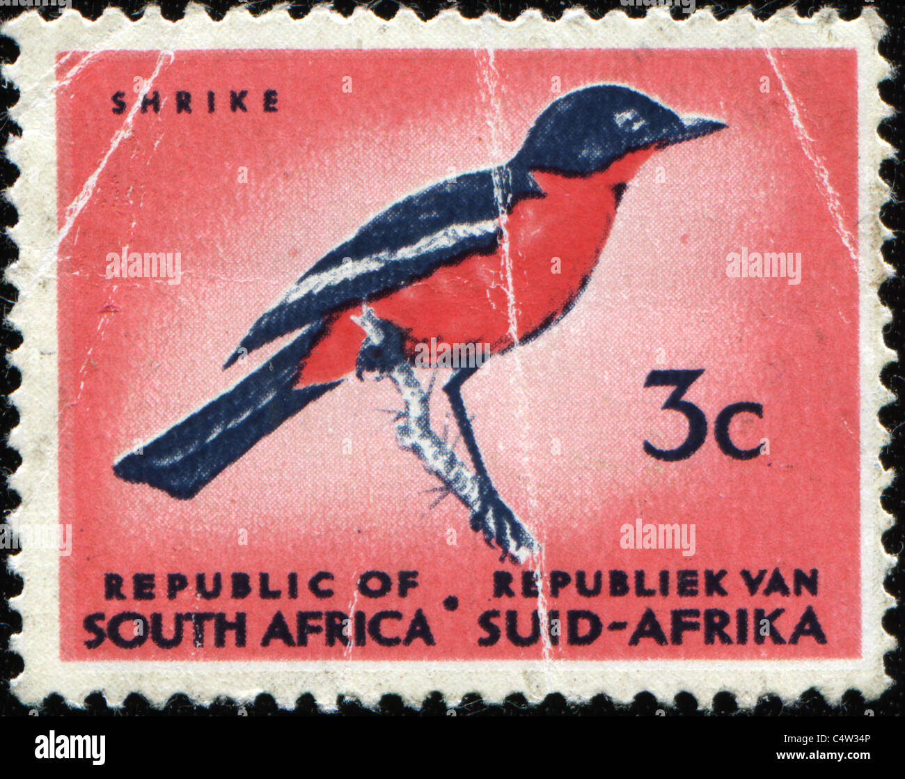 SOUTH AFRICA - CIRCA 1971: A stamp printed in South Africa shows image of a Shrike, circa 1971 - Stock Image