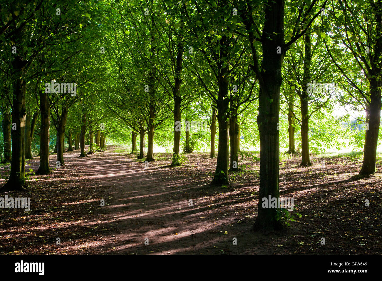 Evening sunlight throws dappled light through an avenue of trees at Coate Water Country Park, swindon, England, - Stock Image
