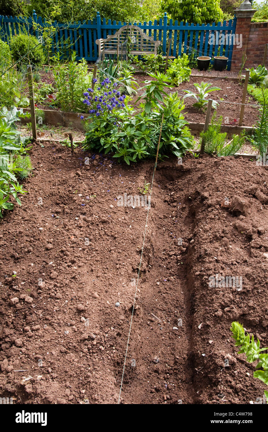 Recently dug trench in a vegetable garden showing the rich red soil, characteristic, of Herefordshire.  UK. - Stock Image