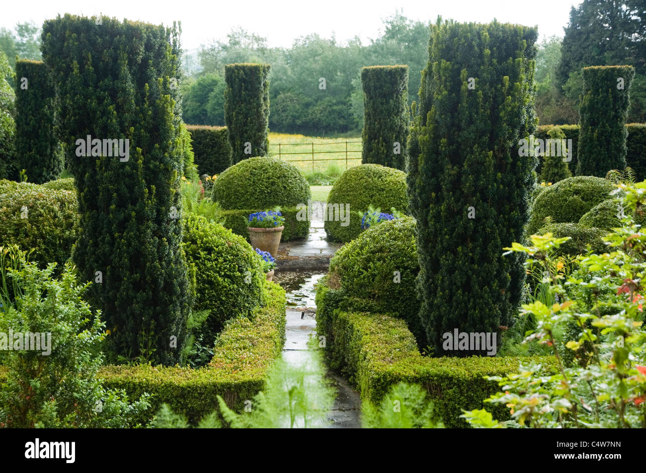 Yew topiary and box hedging, formal pond garden with view beyond to English Countryside at Bryans Ground, Herefordshire, - Stock Image