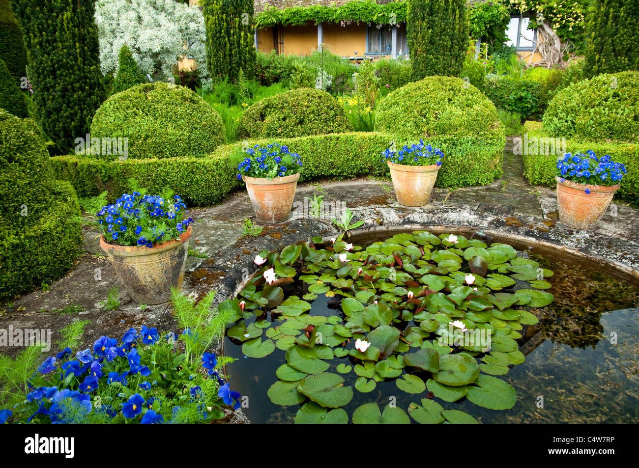 Formal pond garden with box hedging, yew topiary and terracotta pots with blue pansy at Bryans Ground, Herefordshire, - Stock Image